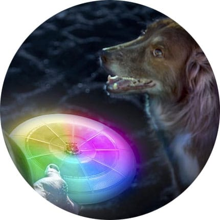 NITE IZE - FLASHFLIGHT DOG DISCUIT LED FLYING DISC, FFDD-07-R8_F_8014_SQRGB_n